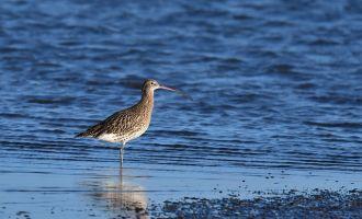 Observation des oiseaux migrateurs