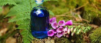 Balade : Découvrez les plantes médicinales et comestibles de l\été à Brocéliande Paimpont