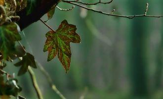 Sortie nature - La forêt, ça me branche