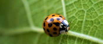 Sortie nature participative Lanvallay