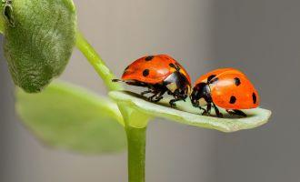 Sortie nature : 1001 pattes, le monde des insectes - Copie
