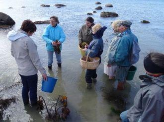 Découverte et cuisine aux algues Trévou-Tréguignec