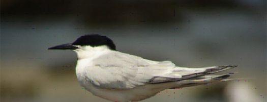 Réserve ornithologique de la Baie de Morlaix