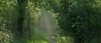 Bois de Lann-ar-Waremm