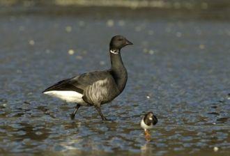 Conférence : voyageurs du ciel, le secret des oiseaux migrateurs par Guilhem Lesaffre Pleubian