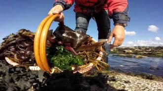 Détente Origin\algues: balade découverte et atelier cuisine Perros-Guirec