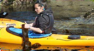 Sous la pagaie, les algues ! Trégastel
