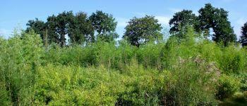 La bambouseraie des 7 sources
