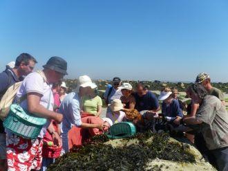 Sortie à la découverte des algues Brignogan-Plages
