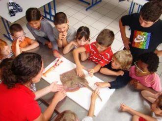 Atelier du goût - Haliotika - De 4 à 7 ans Guilvinec
