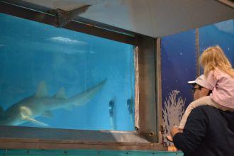 Aquatic Shark : aquarium de requins et spectacle d\otaries Guilvinec