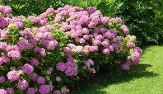 Visite commentée d'un jardin privé Saint-Vougay