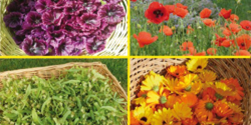 Conférence de larche aux plantes : Les Plantes médicinales au fil des saisons : l'armoire à pharmacie familiale pour se réapproprier notre santé