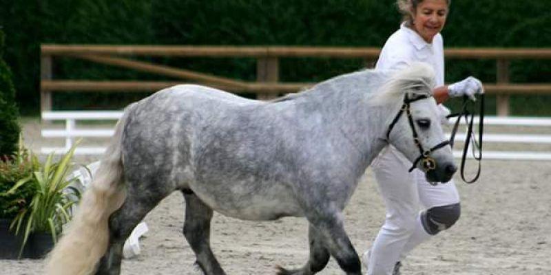 Concours de saut dobstacles poney