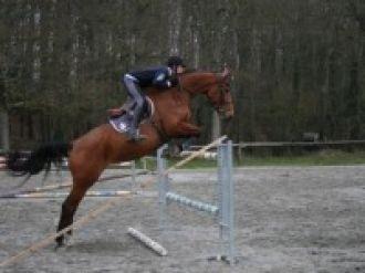 Concours jeunes chevaux SCHL Lamballe