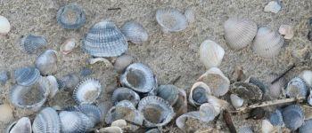 Balade  Laisse de mer : un milieu de vie  à Ambon AMBON
