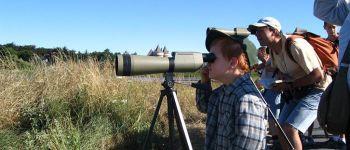 Sortie Ornithologique avec David Lédan à Sarzeau SARZEAU
