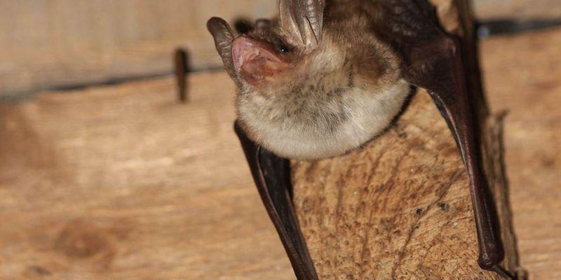 Atelier nature à la loupe : les chauves-souris et nous