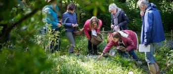 Atelier  Découverte des plantes sauvages comestibles et médicinales  à la pepiterre SARZEAU