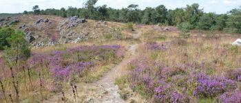 Sortie Nature  La flore des landes ROCHEFORT EN TERRE