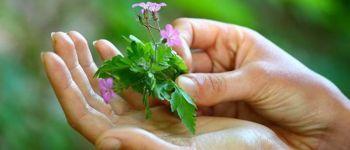 Atelier pratique d\herboristerie VANNES