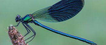 Exposition papillons et libellules ST AVE