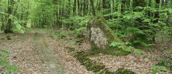 Forêt de Chohan et Treulan