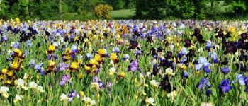 Jardin d\Iris