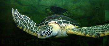 Atelier scientifique « la migration avec les tortues » Vannes