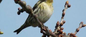 Observation des oiseaux Lavau-sur-Loire