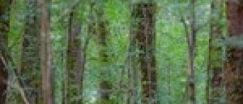 L\éveil de la forêt Vertou