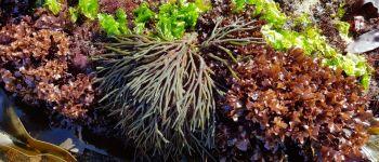 Les algues, nouvelles saveurs marines Saint-Nazaire