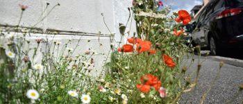 À la découverte des herbes folles Lorient