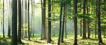 Découverte du massif forestier du Gâvre Le Gâvre