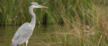 Racontez-nous vos histoires avec les oiseaux du lac de Grand-Lieu Bouaye