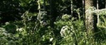 À la rencontre des arbres du bois de la Desnerie La Chapelle-sur-Erdre