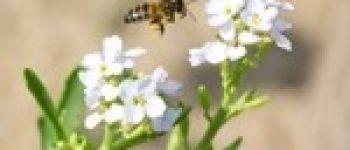 À la découverte des abeilles sauvages Les Moutiers-en-Retz