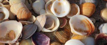 Visite guidée : coquillages et crustacés Pornichet
