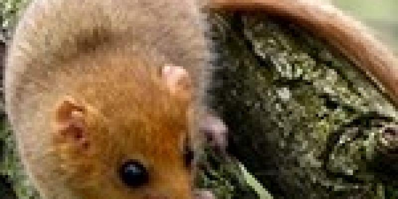 Sur la piste des mammifères à Rougé