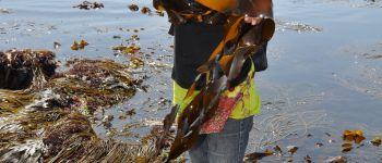 À la découverte des algues Ploemeur