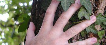 Les arbres et nous : initiation à la sylvothérapie Rennes
