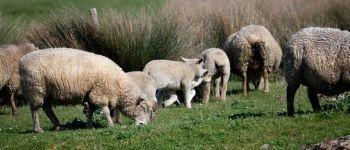 Plantes et moutons Pornic