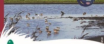 Observons les oiseaux de l'estuaire Donges