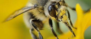 «Au secours des abeilles sauvages!» Pornic