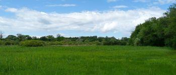 Découverte crépusculaire des marais de Grand-Lieu Bouaye