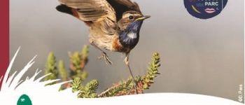 À la rencontre des oiseaux du marais, réserve naturelle régionale Saint-Malo-de-Guersac