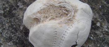 Coquillages, crustacés et animaux de l'estran Piriac-sur-Mer