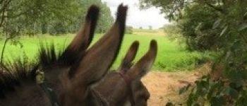 Regard sur le marais des hauteurs de Saint-Lumine avec les ânes Saint-Lumine-de-Coutais