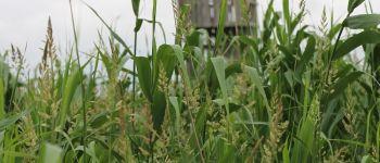 En'Quête de plantes à port Lavau Lavau-sur-Loire