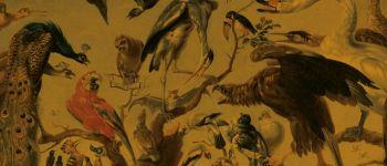 Les Aventures de Papageno Nantes